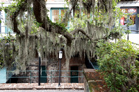 Southern Live Oaks and Spanish moss are ubiquitous in Savannah